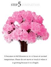 2017 14x11cm roz mare cresc Magic Paper Sakura copac Magic Japoneză Cultivarea copaci Kit Desktop Cires Blossom Crăciun 50PCS