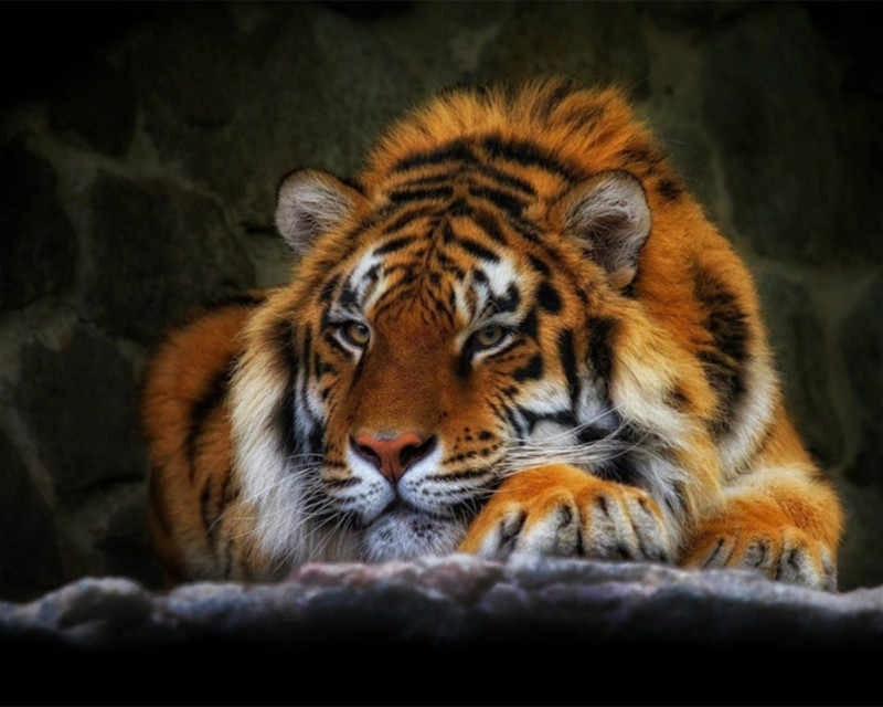 Tiger lying on the ground Art Hand-painted Creative Digital Oil Painting DIY Painting By Numbers 24 Color Pigment Brush Painting