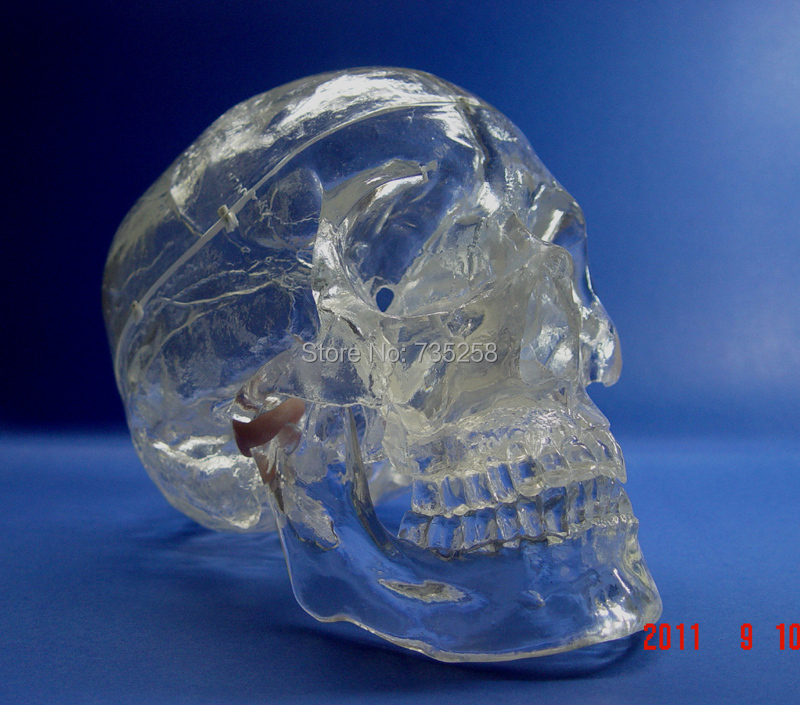 Transparent 1:1 Simulation Model of the Skull,Human Skull Model,Simulation Model of the Crystal Skull estimation of shrinkage of cast al si alloy using simulation