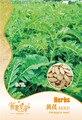 New 2015 Organic Astragalus Seeds 20pcs Mongolia Huangqi Herbal Tea Milkvetch Root Membranaceus Bge.