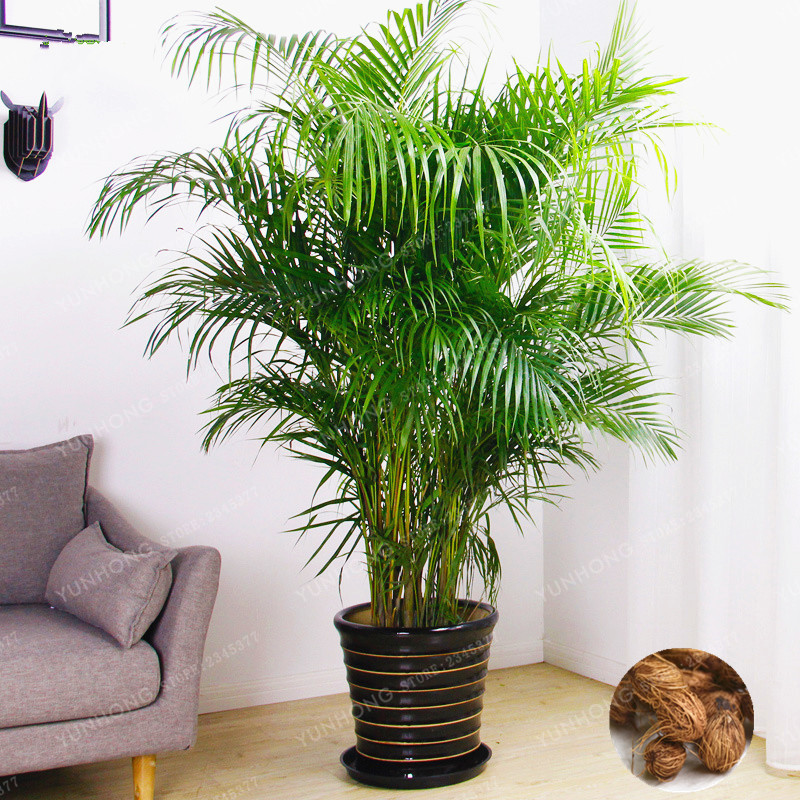 tropical home decor ideas popsugar home.htm best top tropical indoor plant list and get free shipping 10c12390a  best top tropical indoor plant list and