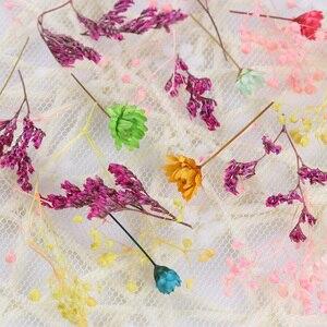 Image 4 - 1 caixa de unhas 3d decoração diy misturado flores secas adorável cinco pétalas flor adesivos para unhas arte decoração beleza