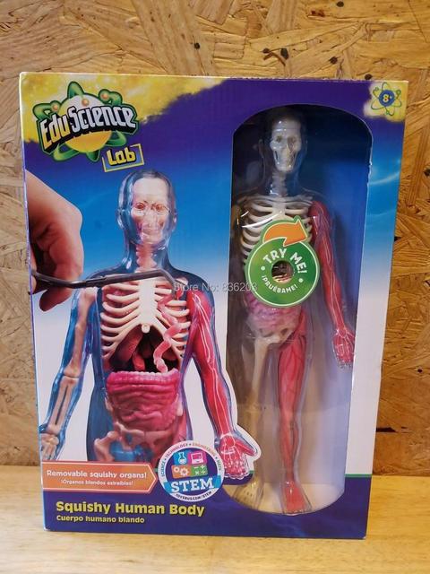 Smartlab Toys Squishy Human Body Funny Anatomy Model Medical