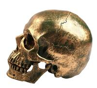 Resin Imitation Bronze Skull Statue Human Head Resin Replica Medical Model Modern Home Decoration Skull Sculpture