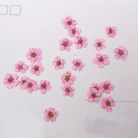 Pink Small Flowers Dia 6 8MM Per Pc Press Flower Dried Flower For DIY Decoration 1