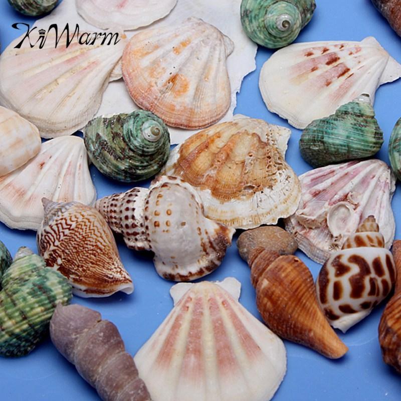 shell da collezione-acquista a poco prezzo shell da collezione ... - Conchiglie Per Decorazioni