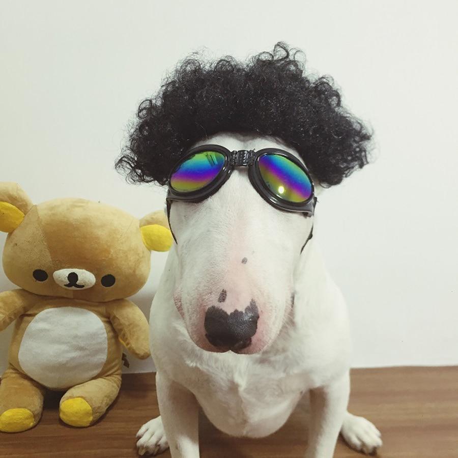 Nemokamas pristatymas sprogimo naminių gyvūnų perukas šunys - Naminių gyvūnėlių produktai - Nuotrauka 3