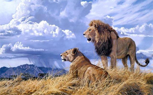 Tier kunst landschaft natur wildlife afrikanische paar liebe himmel ...