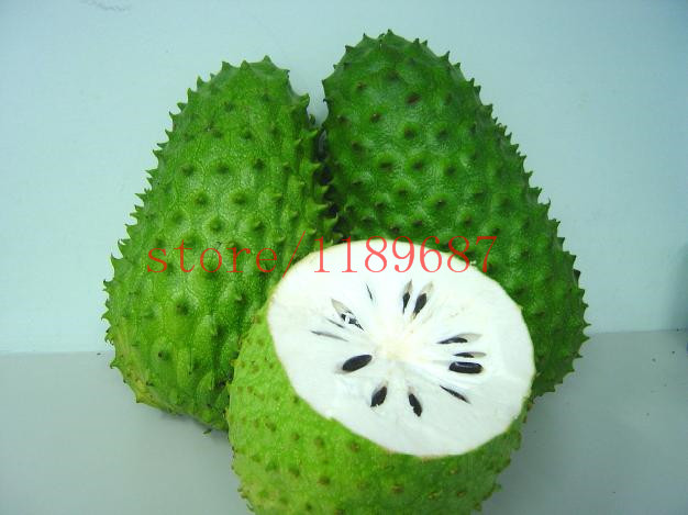 20 pcs SOURSOP Graviola Guanabana Annona muricata SEEDS Tropical Fruit NO-GMO good for health