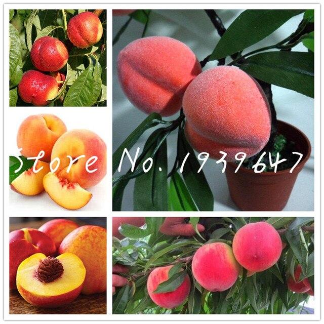 1 pçs/saco Doce de Pêssego Montanha Outono Peach Red Peach Tree Fruit planta bonsai Para Casa e Jardim Em Vasos Bonsai Árvore planta