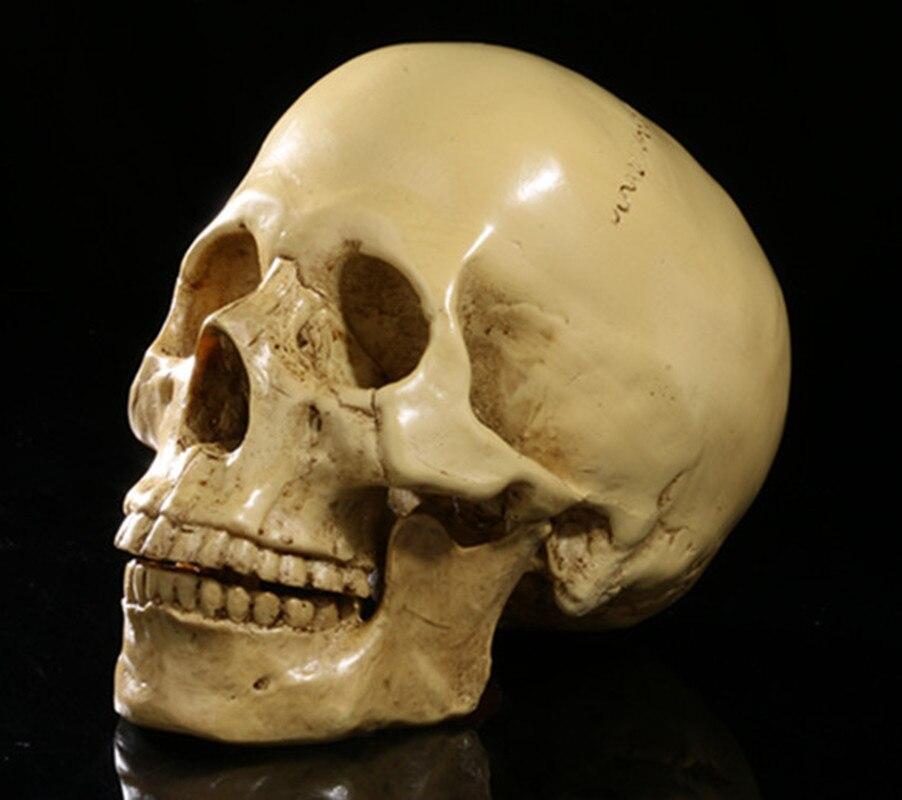 Medical Science resin Skull bone Bar A decoration Human skull Model Animal specimen Halloween