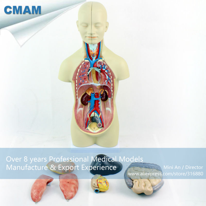 12012 CMAM-TORSO01 Asexual Torso 12 Parts 45cm High Anatomy Model, Human Anatomy Model for Medical Science,Best Gift for Doctor sagitally section model about tissue decomposition model for doctor patient communication model with magnetic