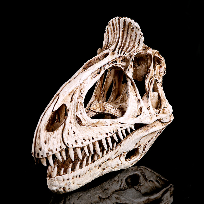 6.5x19x13cm / resin skull home decoration craft animal <font><b>Dinosaur</b></font> skull MOLD <font><b>BONES</b></font>