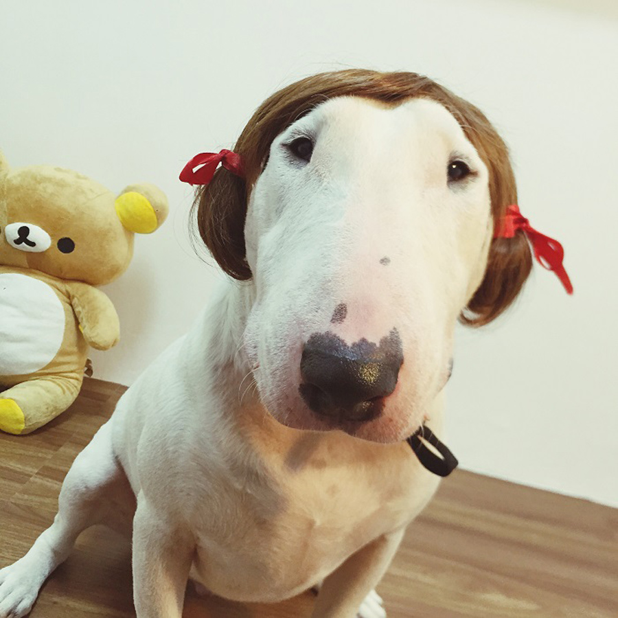 Hot Sale European style Wig braids Pet hat The large dogs Funny headgear Outdoor Accessories Outdoor Hiking Sports dog supplies