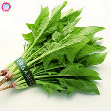 100pcs Chinese green spinach seeds Real organic Heirloom vegetable seeds Edible planting for spring farm supplies High germinat
