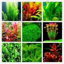 100 шт./пакет аквариумные растения карликовые деревья трава водный для воды завод Сад Комнатные декоративные растения травы Флорес для домашнего аквариума