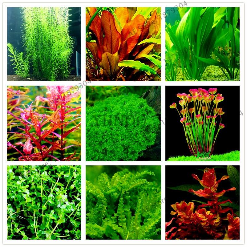 100pcs/bag Aquarium Plants bonsai Grass Water Aquatic Plant garden Indoor Ornamental Plant Grass flores for Home Fish tank partes del cable coaxial