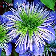 Hot Selling 50pcs/lot Mix Beautiful Clematis Seeds Bonsai Flower Seeds Diy Home Garden Easy Grow Jardin Plant Free Shipping