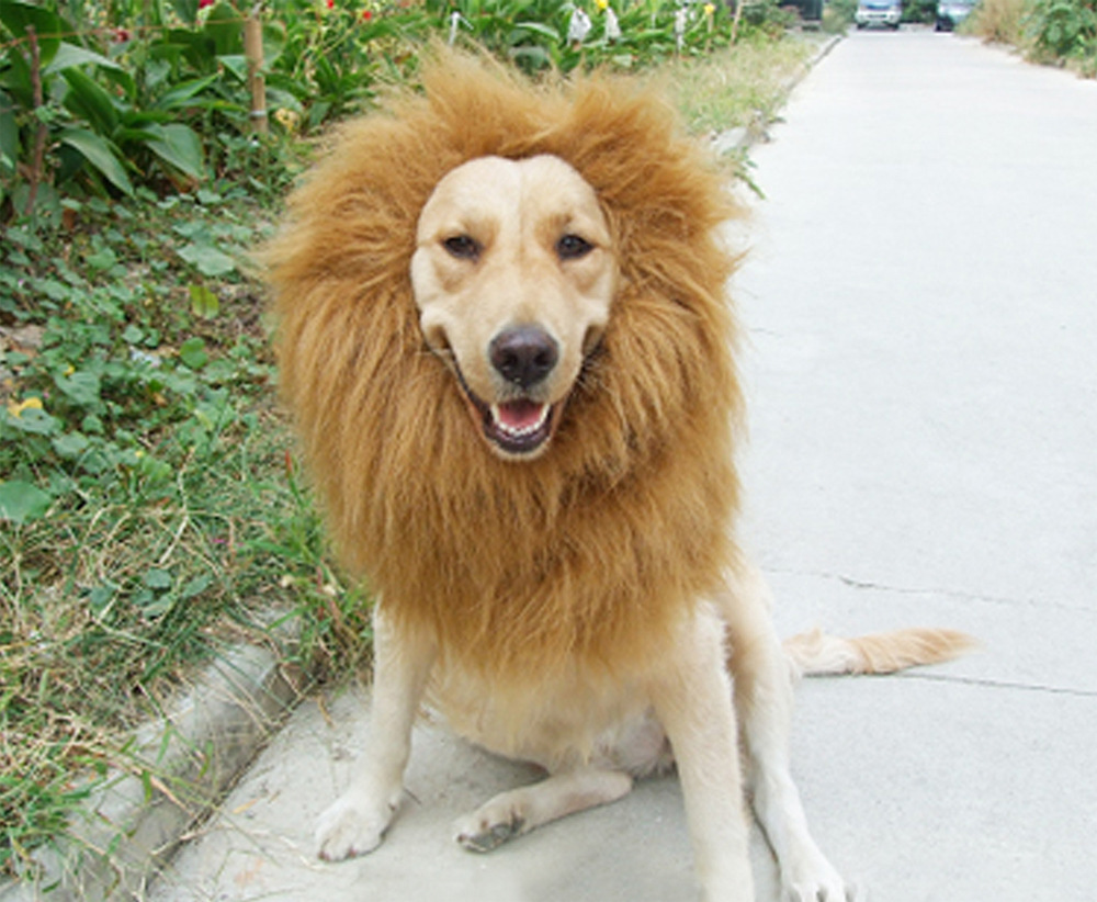 Free Shipping King of the Jungle Funny pet transfiguration Funny