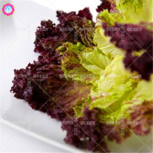 200pcs organic purple lettuce seeds Real Non-GMO green vegetable seeds Edible planting for spring farm supplies 95% Germination