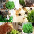 300 шт./упак. Cat трава 100% высокое качество и лимонного дерева долгий срок жизни кота из натуральных материалов трава кошка с маленькими пушистыми помпончиками для Управление игрушка - фото