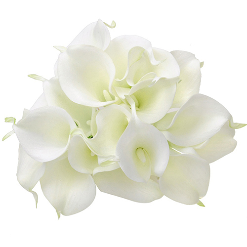 beautiful lily flowers promotionshop for promotional beautiful, Natural flower