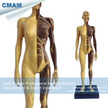CMAM-PRC42 1:6 Antique Resin Human Female Muscle Anatomy Teaching Model Skull Head Medical Artist 30cm