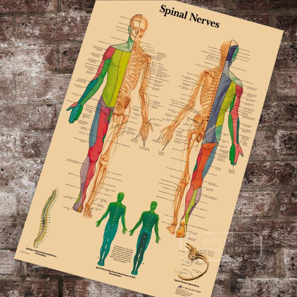 Anatomy Pathology Anatomical Spinal Nerves Chart Classic Canvas