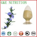hot selling Rosemary leaf Extract, 60% Carnosic acid