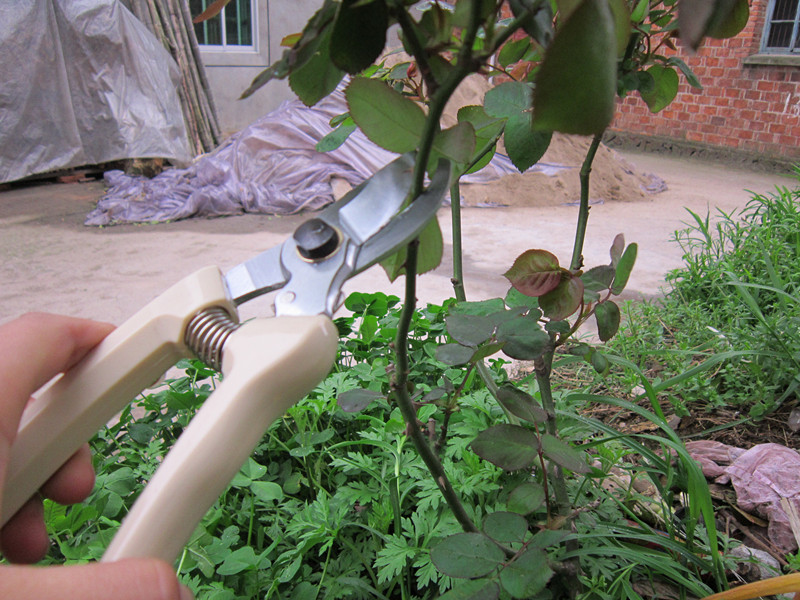 Pruning shears squid branch cut pruning shears hedge for Big scissors for gardening