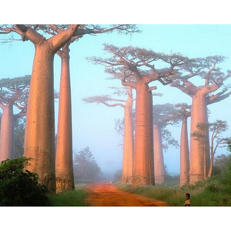 How to plant a baobab bonsai tree