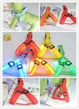luminous medium pet belt