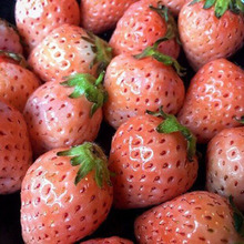 Pink Cream Strawberry Japanese Sweets Fruit Plant Home Garden Suculenta Strawberries Edible Nutritious 300 Pcs