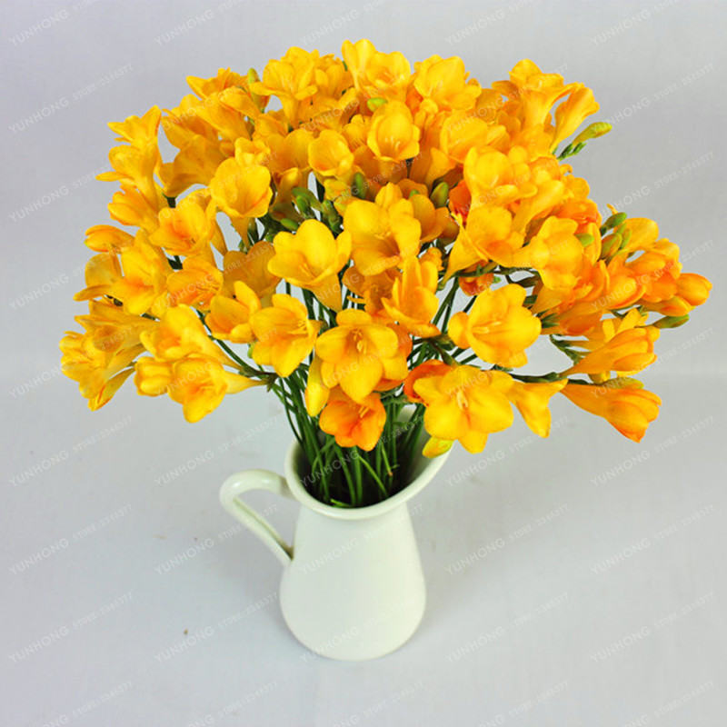 True Freesia Bulbs Indoor Potted Flowers Natural Growth Fl Home Garden Plant Flower 20pcs In Bonsai From On Aliexpress