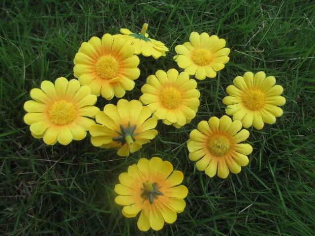 Download 43+ Gambar Warna Bunga Matahari Paling Cantik