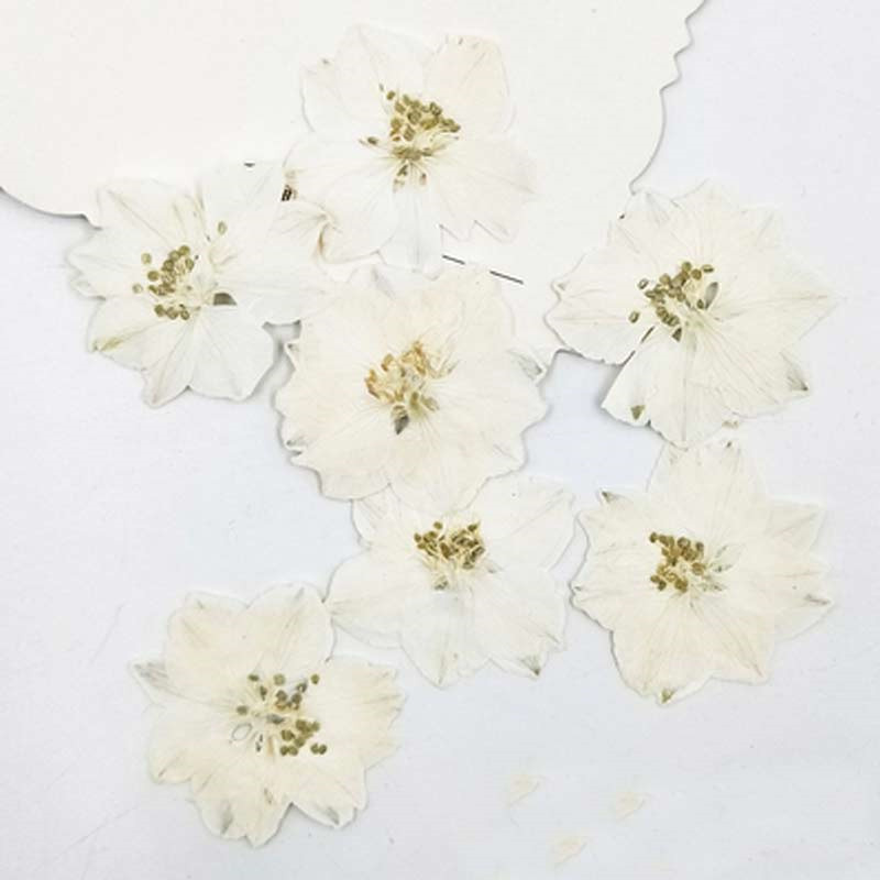 Larkspur Weiß/Blau Probe getrocknete blumen press natur blume DIY handmande floral Kostenloser Versand-in Künstliche & getrockneten Blumen aus Heim und Garten bei  Gruppe 1
