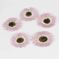 Helipterum Roseum Dla Ball Dekoracji Suszone Kompozycje Kwiatowe darmowa przesyłka 1 partia/120 sztuk