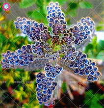100pcs Rare Mixed Orchid Seeds Beautiful Bonsai Flower Seeds Indoor Ornamental Plants Potted for home garden Best packaging Easy