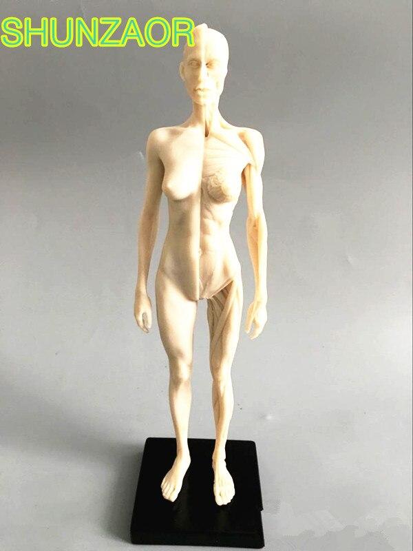30 cm weiß Menschliche Weibliche Modell Anatomie Schädel Kopf Muscle Knochen Medizinische...