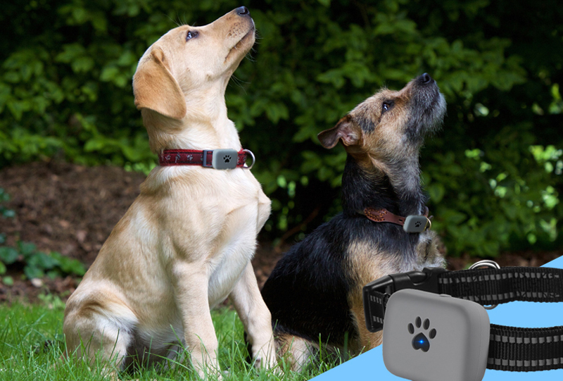 Collars, Harnesses & Leashes Dogs New Arrivals SOS call, two way communication Mini Cheap GPS Pets Tracker  My Pet World Store