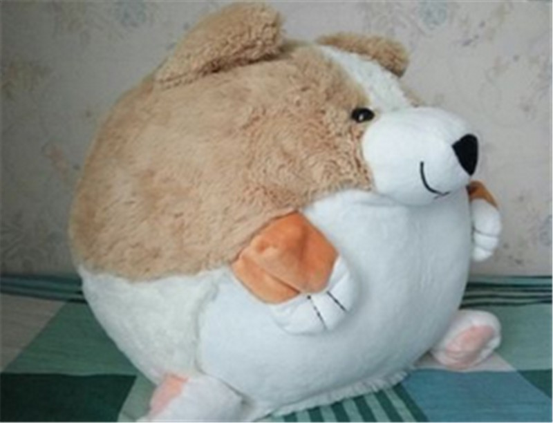 Corgi dog14