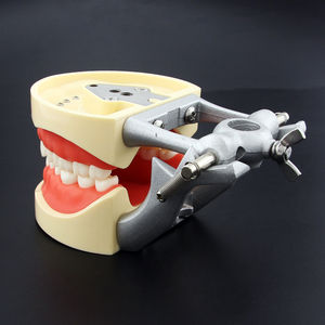 Image 3 - kilgore Nissin Type Dental Typodont Model 200 with Removable Teeth