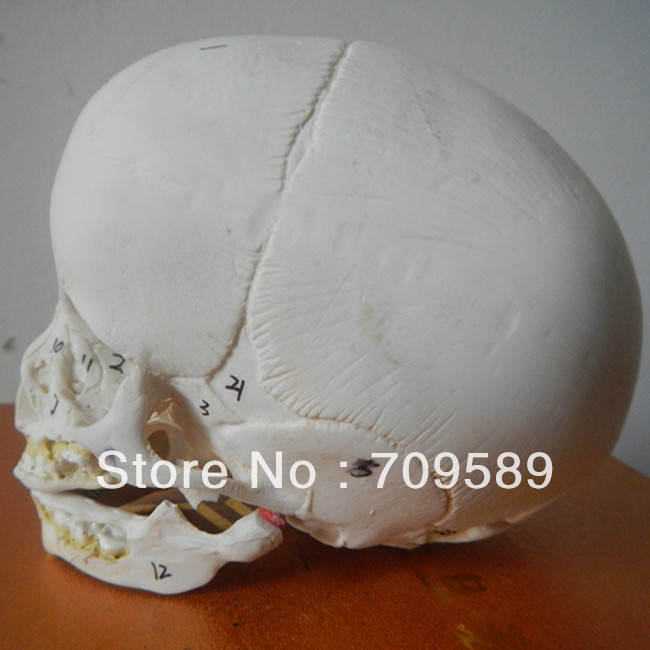 ISO Advanced Infant Skull Model, Anatomical skull Model наборы для творчества junfa слайм junfa toys unicorn rainbow noise в асс