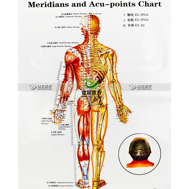 Aliexpress Com Buy 3pcs Set 47 69 Wallmap Ear Acupuncture Map Ustration Of Acupuncture Points Map Male Body Meridians And Acu Points Chart Free From