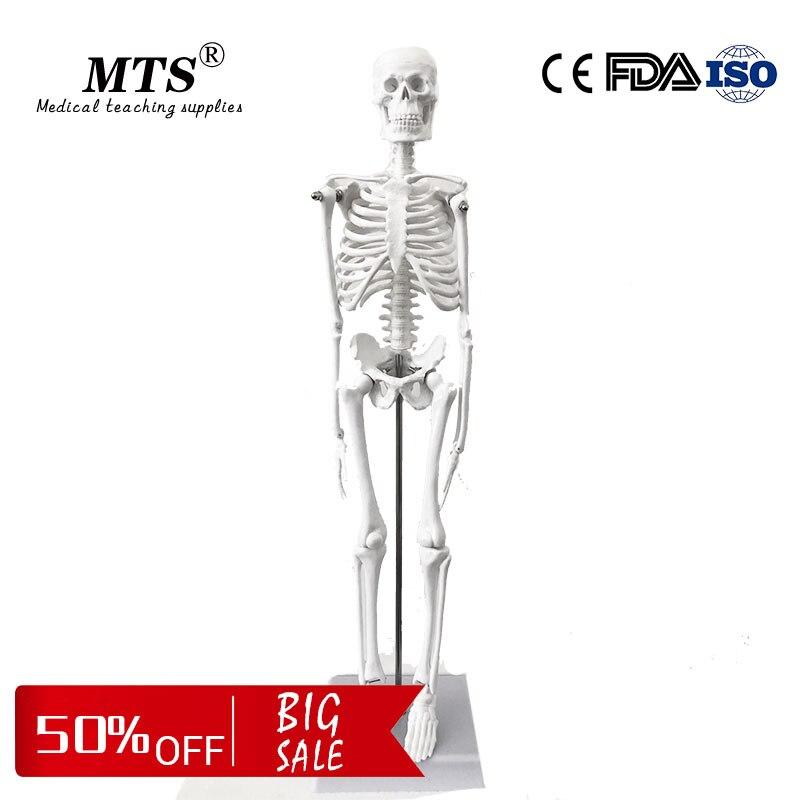 Modèle de squelette anatomique humain de 45CM pour le modèle d'os d'enseignement d'anatomie médicale