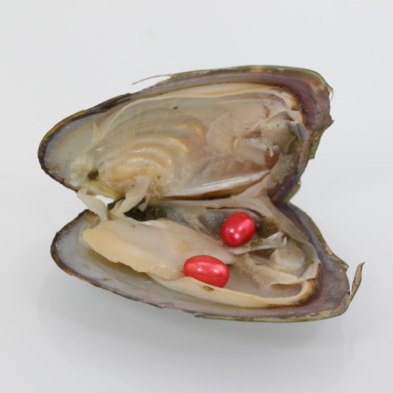 2018 wholesale 20 color oval Pearl Twins in Oyster rice freshwater natural Cultured Fresh Oyster Pearl Mussel Farm Supply FO032