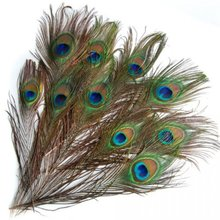 20 pcs Artificial peacock feathers w / Eyes