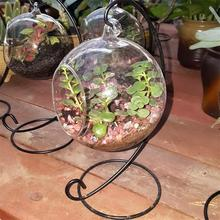Hanging Glass Ball Flowerpot