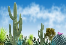 Laeacco Spring Blue Sky Cactus Flower Scenic Baby Child Photography Background Customized Photographic Backdrop For Photo Studio professional 10x20ft muslin 100% hand painted scenic background backdrop spring flower wedding photography background