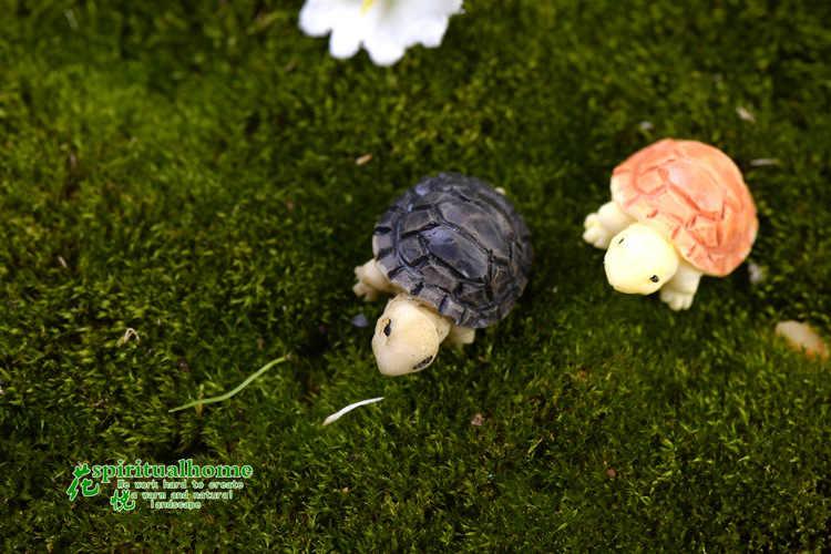 Bryophyte микро пейзаж мясистые растения два цветные маленькие черепахи Черепаховые раковины Diy украшения домашний декор Миниатюрный Сад